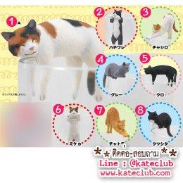 (พร้อมส่งแบบยกเซท) ตุ๊กตาเกาะแก้ว PUTITTO Cat (1 set มี 8 ตัว ความสูงประมาณ 3-3.5 cm)