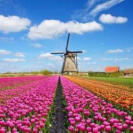 ทัวร์ยุโรป : Grand Flower Italy Swiss France Belgium Netherland
