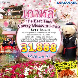 ทัวร์เกาหลี : The Best Time Cherry Blossom  in Seoul