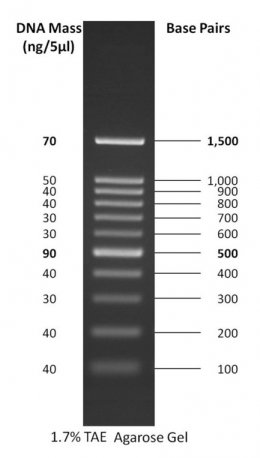 Gold Bio: 100 bp DNA Ladder