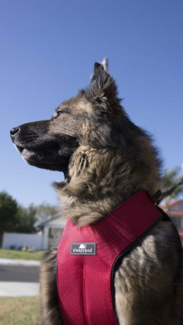 สายจูงสุนัข Clickit Sport - (L)