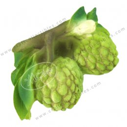 Custard Apple (bunch)