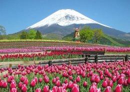 (สงกรานต์2) โตเกียว ฟูจิ คามาคูระ ทุ่งดอกทิวลิป 5 วัน 3 คืน (TG)