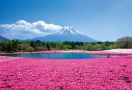 (สโนว์วอล3) โตเกียว พิงค์มอส ชิราคะวะโกะ นาโกย่า 6D3N (TG)
