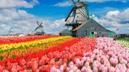 แกรนด์ทิวลิป 10 วัน : อิตาลี-สวิส-ฝรั่งเศส-เบลเยี่ยม-เนเธอร์แลนด์ บินการ์ต้า (QR)