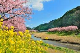 (ซากุระ2) โอซาก้า มัตซึดะ โตเกียว การบินไทย 6D3N (TG)