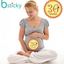 สติ๊กเกอร์อายุครรภ์ MOM Bsticky Buzz Buzz – Pregnancy Belly Stickers