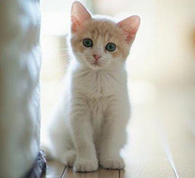 ศูนย์การแพทย์เฉพาะด้านคลินิกแมว